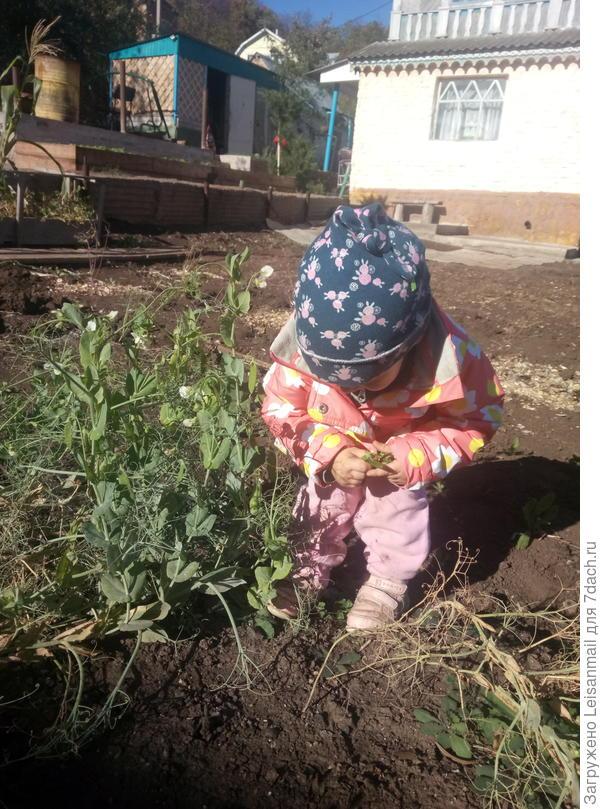 Собиратель урожая