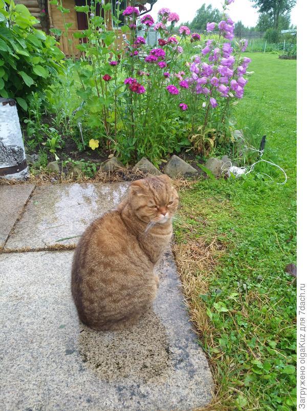 Кот Джон на отдыхе