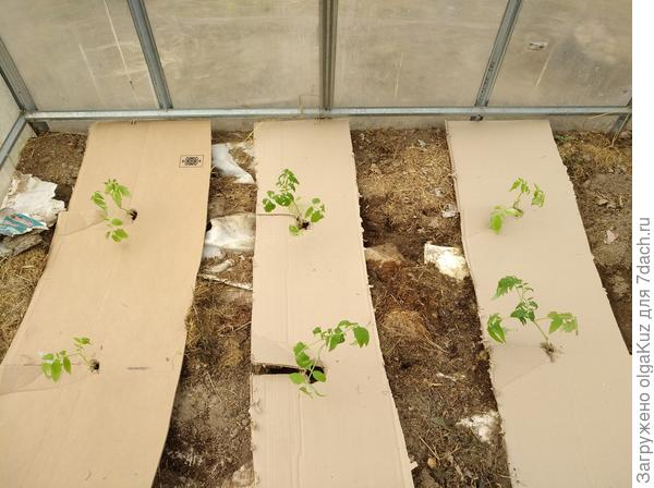 Так выглядят высаженные растения