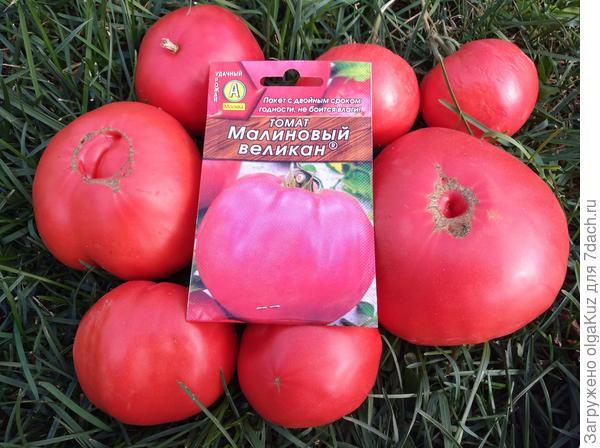 томат малиновый гигант отзывы фото чат как отдельными