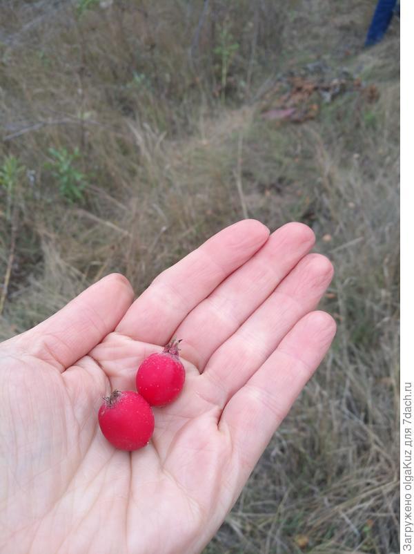 Это сами ягоды