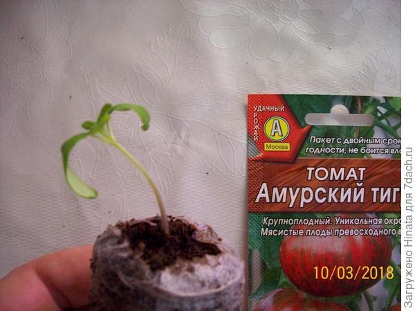 1 растение в торфяной таблетке.