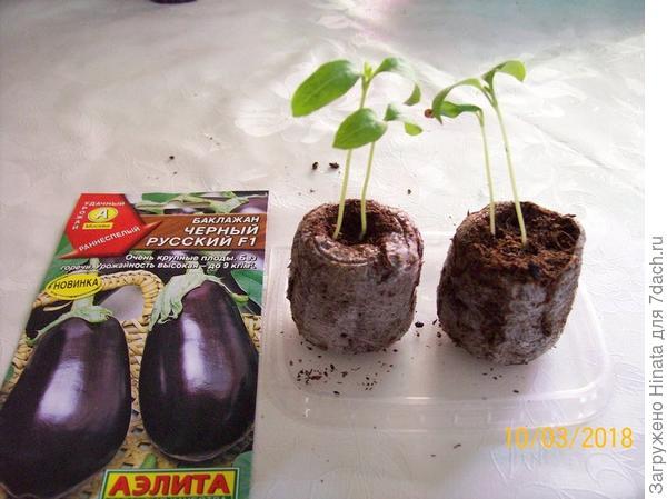Сеянцы в торфяных таблетках. Намечаются настоящие листочки, сеянцам 10 дней.