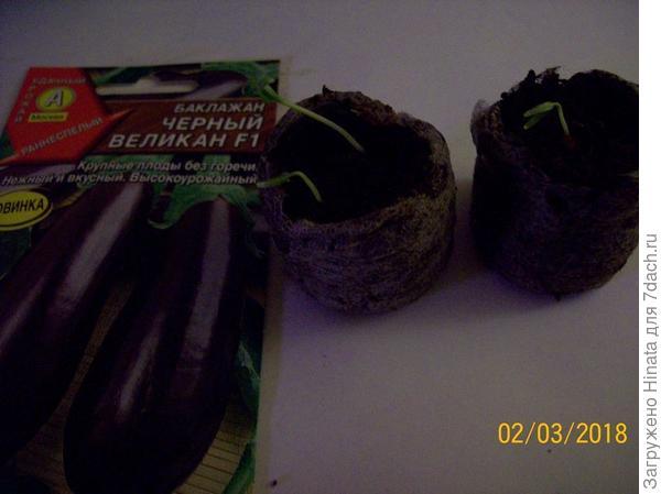3 растения в торфяных таблетках 02 марта.