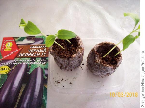 Растения в торфяных таблетках на 10 марта. 10 и 7 дней после появления всходов.