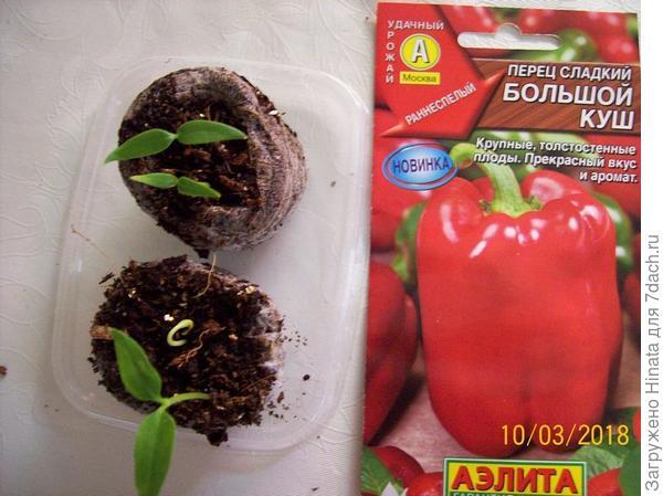 Сеянцы на 10 марта. только семядольные листочки и петелька.
