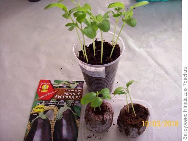 Растения на 10 марта.