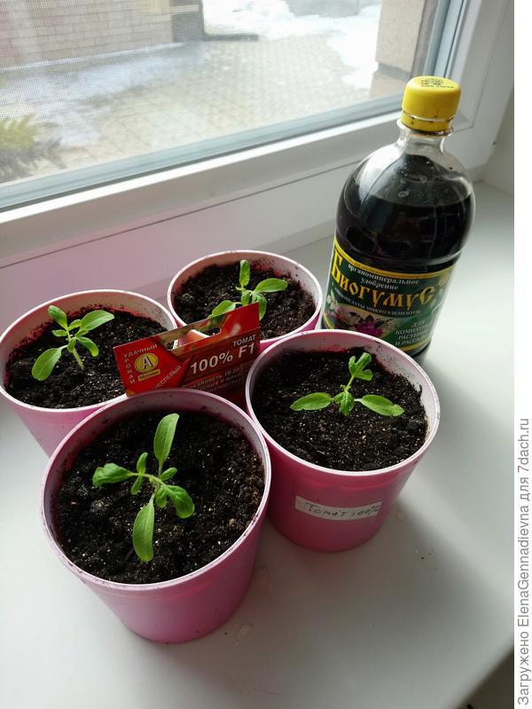 Растения через 6 дней