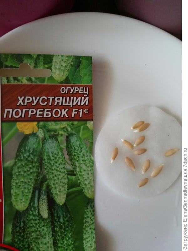 Проклюнувшиеся семена