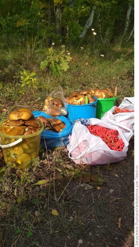 дары сентябрьского леса.