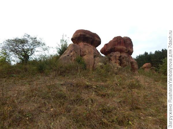 Красные грибы.