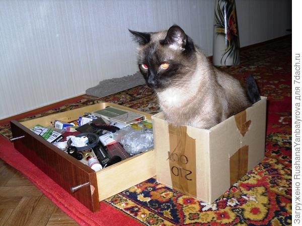 Меняем мебель, освобождаем старую, а Тимка занял коробку.