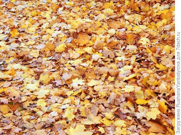 Вот и лето прошло... или Здравствуй, осень! Люблю ли я тебя?