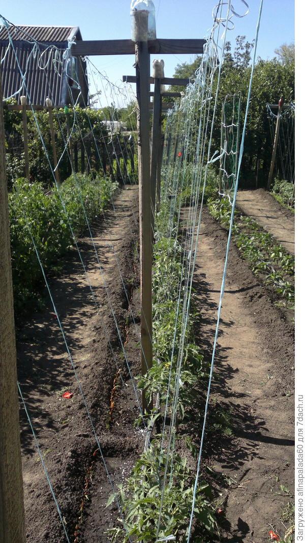 Так подвязали томаты на основной перголе.