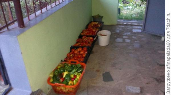 Один из сборов урожая.