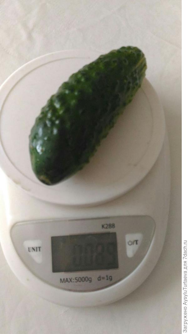 вес огурца Зятек