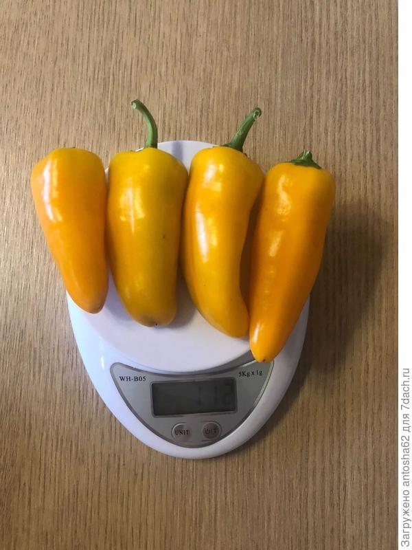Итоговый отчет. Перец сладкий 'Апельсин Желтый' F1