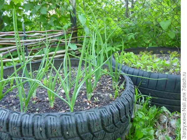 Огородик подрастает...Скоро будем кушать свежую зелень.