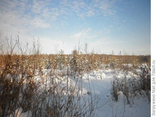 Озеро Бабошкино. Берега его постепенно заболачиваются, и само озеро становится всё меньше...На этих болотцах уже можно увидеть растущие сосенки и ели.