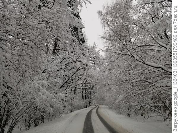 Завораживающий и сказочный пейзаж дороги через лес, ведущей в поселок.