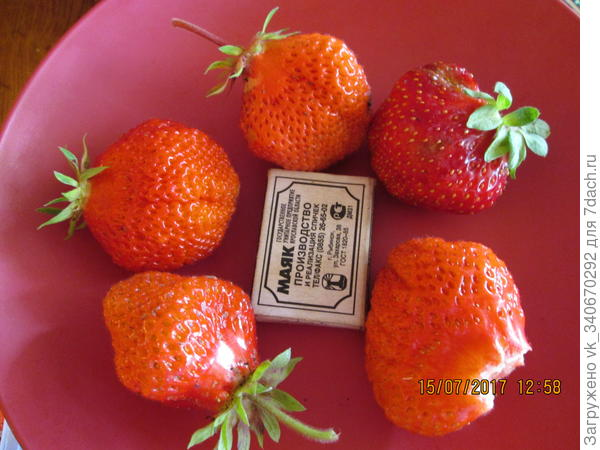 Клубничка - чудо ягода!
