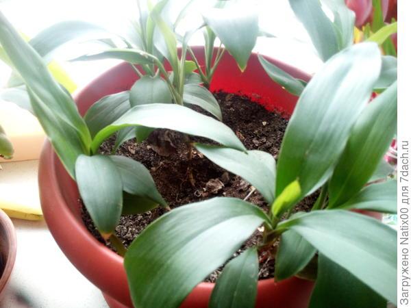 Подскажите пожалуйста название растения, буду очень благодарна.