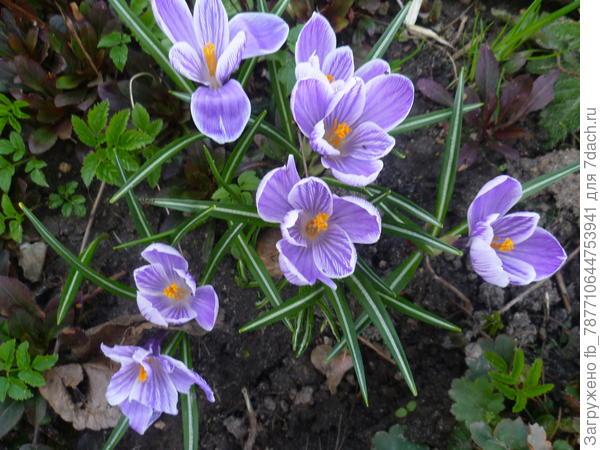 цветы,весна