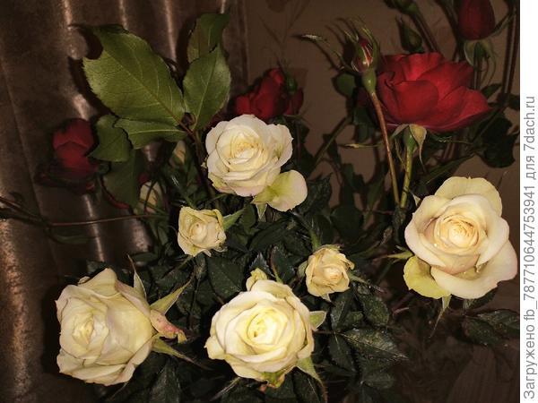 Как укоренить срезанные розы из букета?