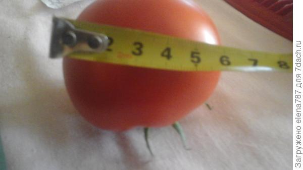 Его размер 5-6 см.,как было сказано у его предшественника был размер 8см,но и 6см это тоже очень хорошо.