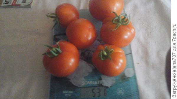 Плоды на весах,общий вес 531г.