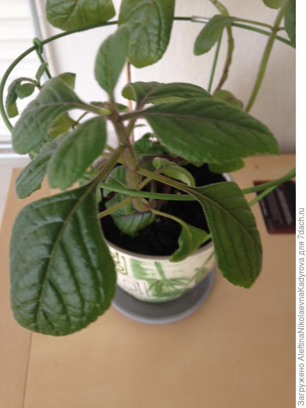 Неизвестное для меня растение ?!