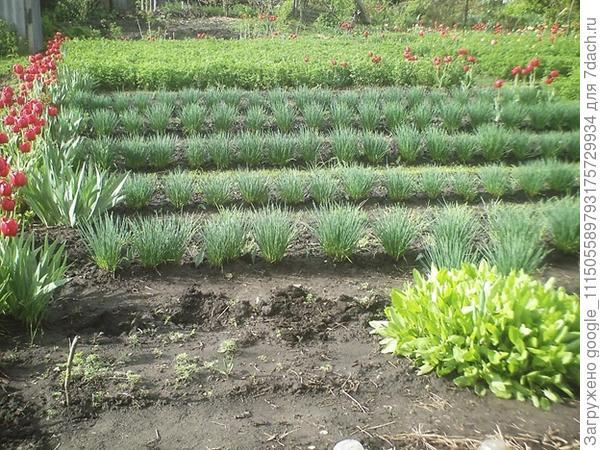 Вот такой мой огород весной