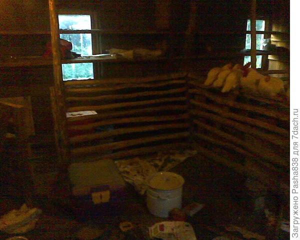 Козий загон. Здесь, как и везде у меня - невероятный беспорядок. Вот отселю кур в стеллаж с выгулом - и буду убираться, счищать их помёт лопатой, мыть все деревяшки, чистить пол, насыпать сено. Здесь будут козы жить.