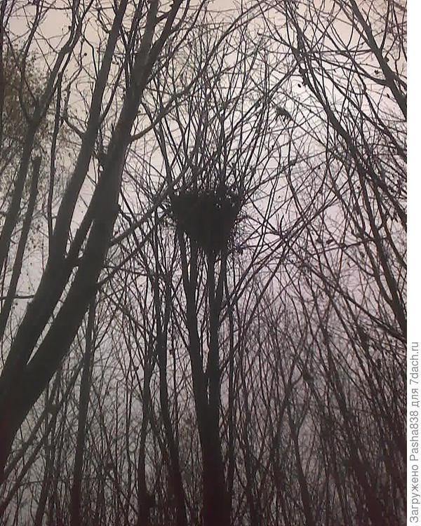 Как я понимаю, это б/у гнездо коршунов. Только они их обычно вьют выше, но тут, видимо, просто лес весь низкий, и они решили здесь.