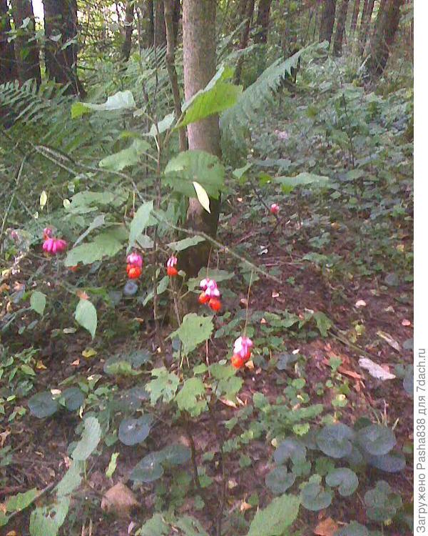 Какие-то интересные красные висюльки-цветочки