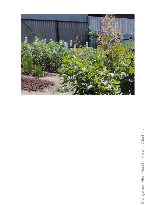Фото 4_ огород и часть цветника
