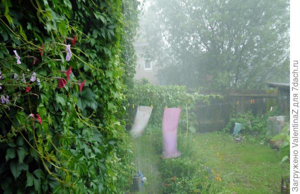А у нас сегодня ливень с грозой! Ливню рада, растения просят полив! ( Тверская область)