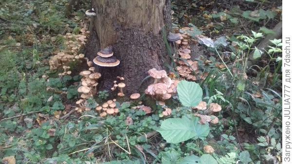 Моя любовь - грибы и лес...