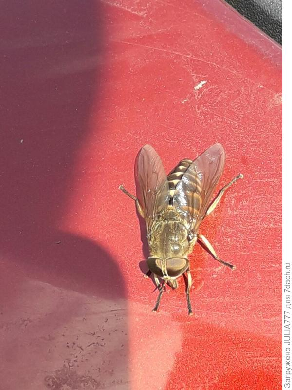 А осы и пчелы - мой страшный сон из прошлого...