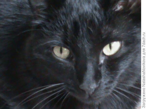 это детёныш кошки, ему теперь 7 лет