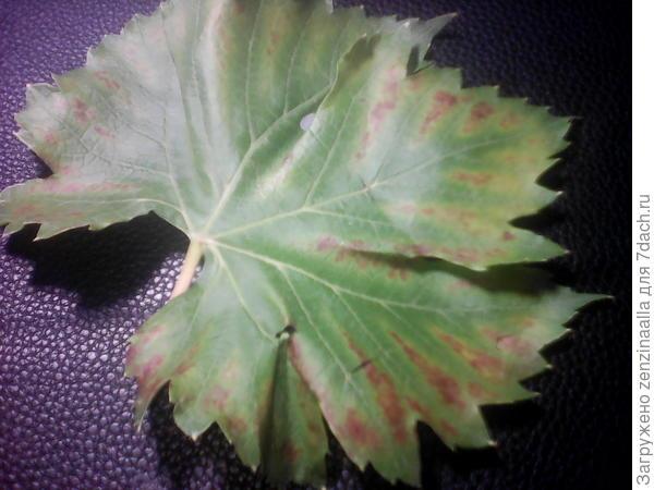 Такой листок на кусту один