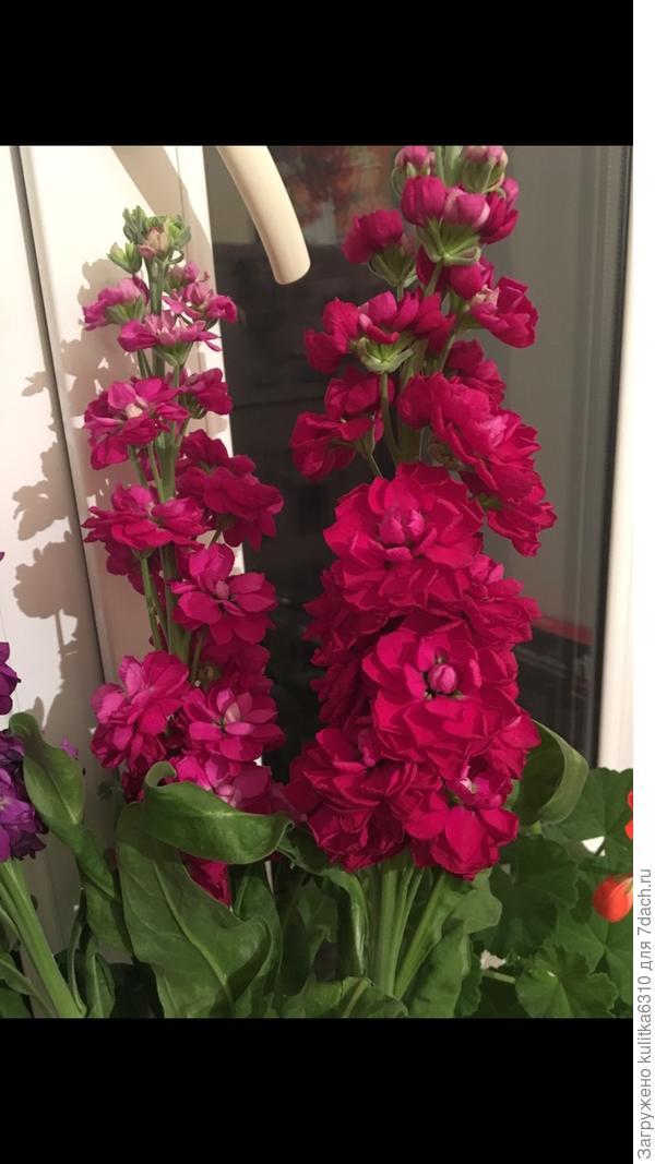 Кто-нибудь знает как называется этот цветок?