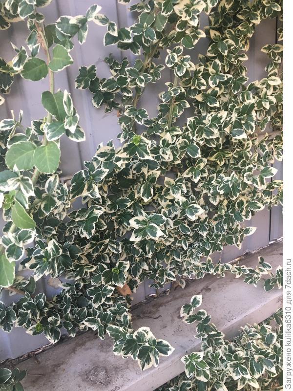 Что же это за растение?