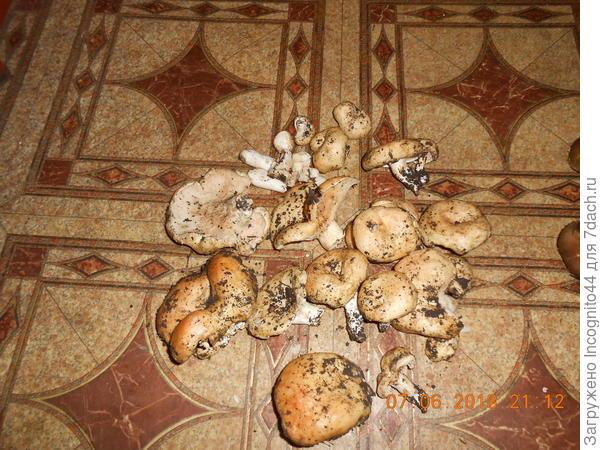 Неизвестный гриб