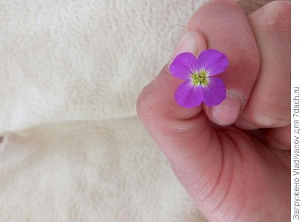 что это за цветочек ?