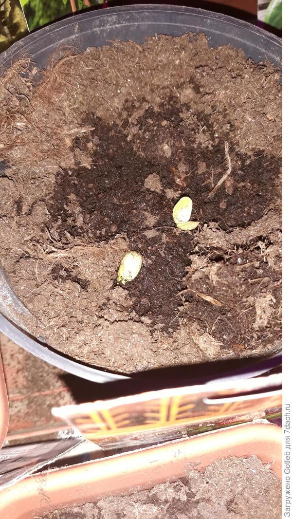 Несмотря на вспышку, так или иначе- ростки выглядят, мягко говоря, странно