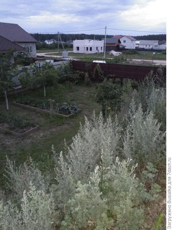 правый забор и в конце виноградник