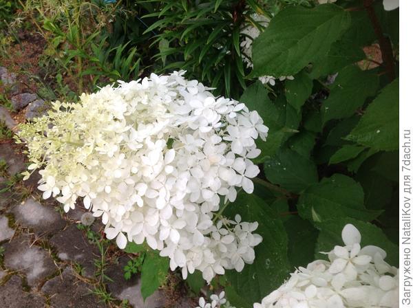 N 1 соцветие (не могу повернуть, смотрит вверх)