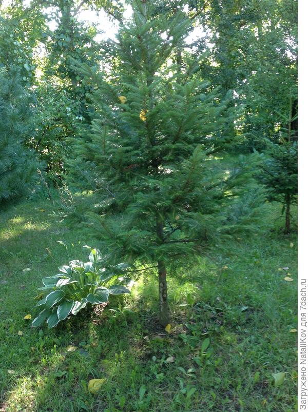 Деревце справа