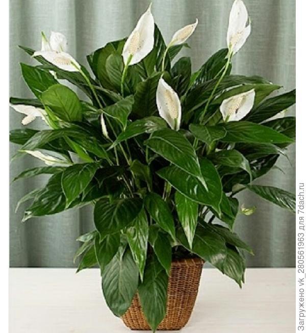 Как называется этот цветок